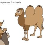 Kamel mit Silikonimplantat
