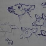 Okapi Zeichnungen