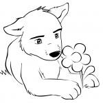 Baby Wolf mit Blume